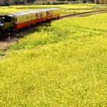 【ブラウンファーム】トレインで無理難題を成功させるコツ