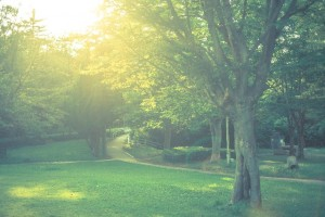 LINEブラウンファーム 木を診る 画像